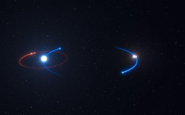 Orbita planety (czerwona) i orbity gwiazd (niebieskie) układu HD 131399 /ESO /materiały prasowe