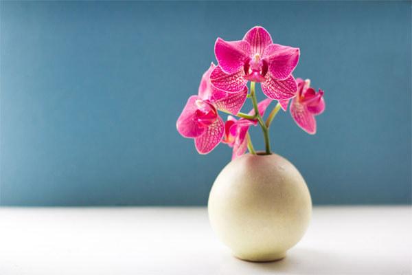 orchidea /© Photogenica