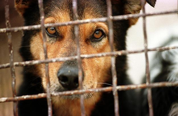 Organizatorzy chcą zwrócić uwagę na problem znęcania się nad zwierzętami domowymi, fot. P. Bławicki /East News
