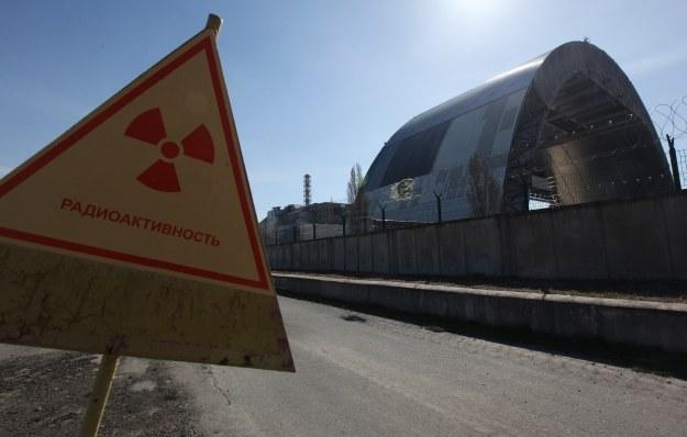 Organizmy powoli uczą się, jak radzić sobie z promieniowaniem /AFP