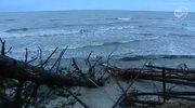 Orkan Ksawery powalił 600 drzew na wydmach w Dźwirzynie