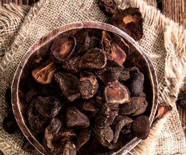 Orzechy Cola – zastąpią kubek mocnej kawy