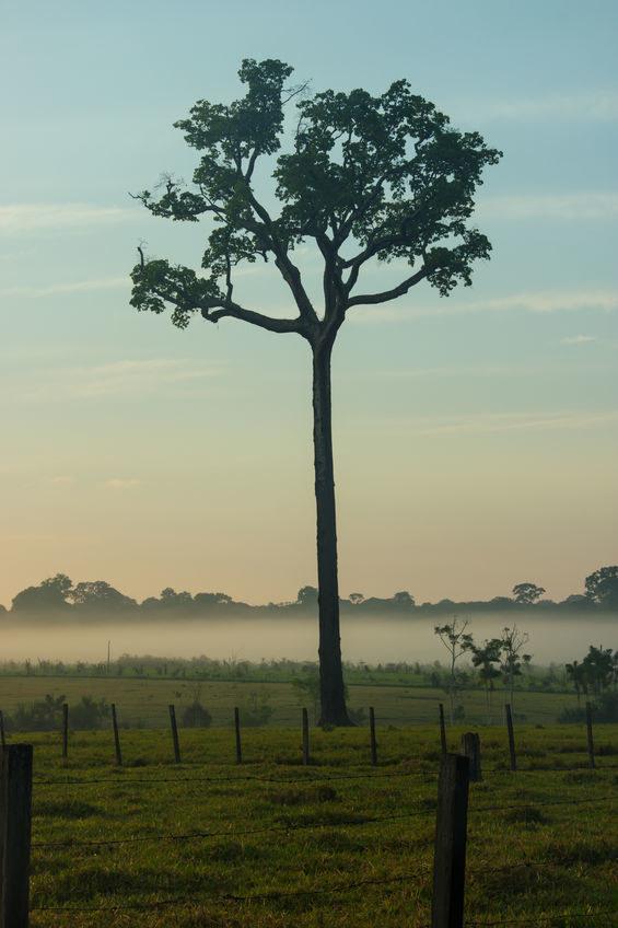 Orzesznica brazylijska /©123RF/PICSEL