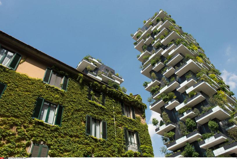 Osiedle Bosco Verticale w Mediolanie wygląda pięknie i nie ma problemów z insektami /SIPA /East News