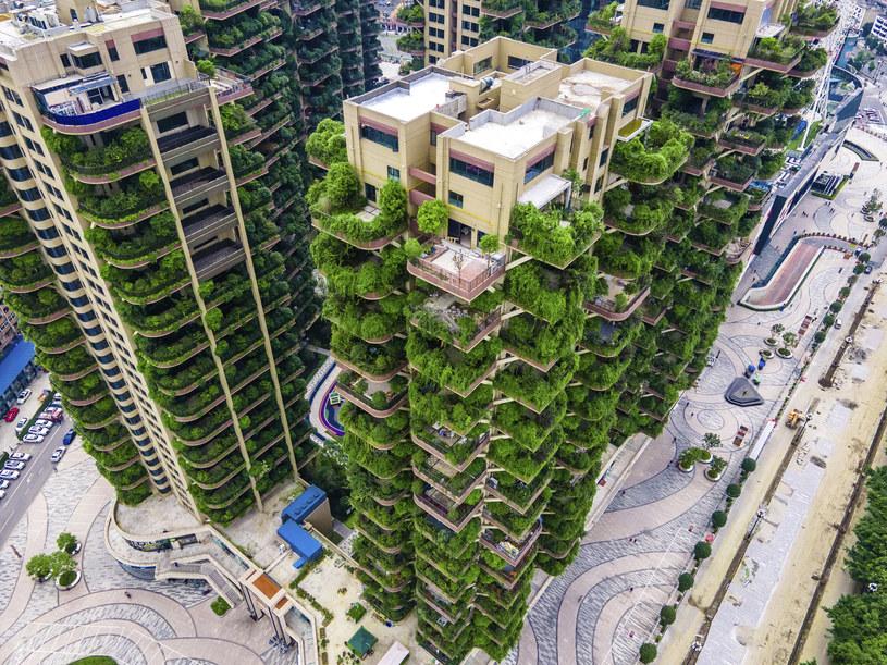 Osiedle Qiyi City Forest Garden miało być rajem. Co poszło nie tak? /Associated Press /East News
