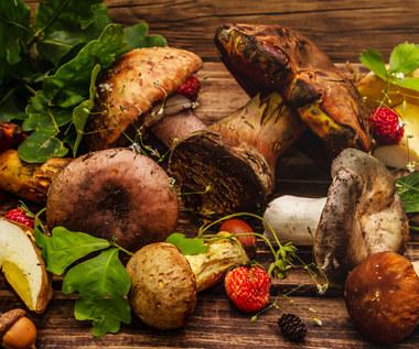 Osiem pomysłów na grzyby