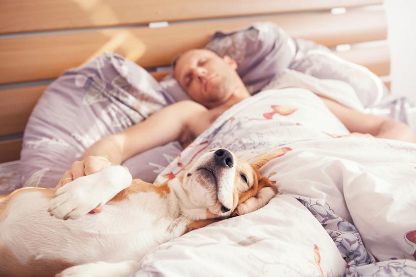 Osoby, które śpią lekko, powinny wyprosić zwierzęta z łóżka /123RF/PICSEL