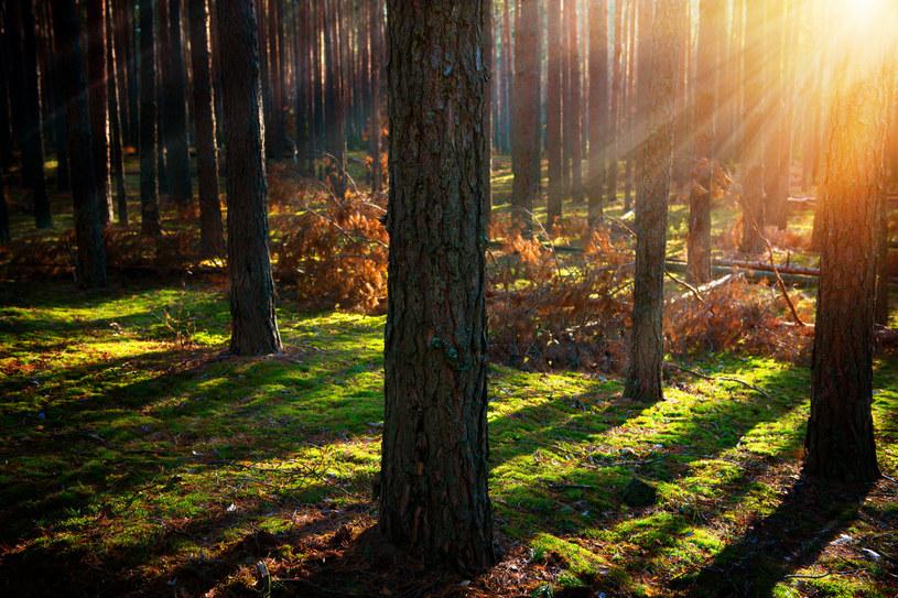 Ostatni dzień września będzie dość słoneczny /123RF/PICSEL