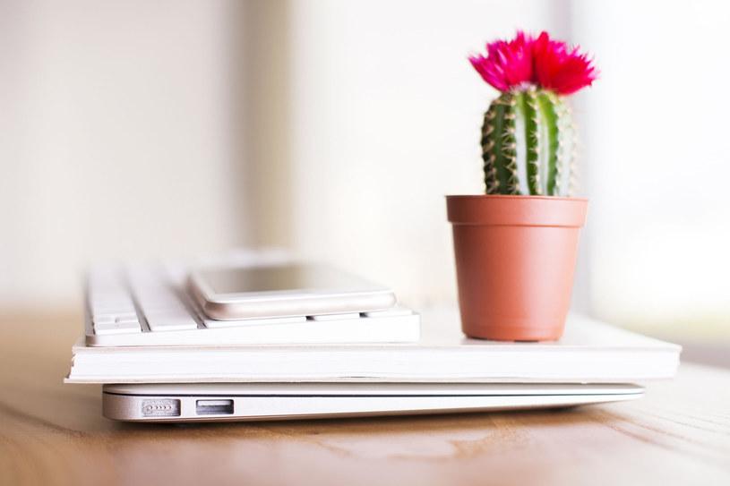 Otaczaj się roślinami /123RF/PICSEL