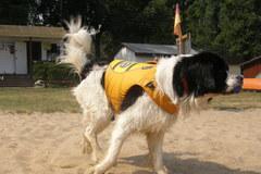 Oto Bavet! Psi ratownik!