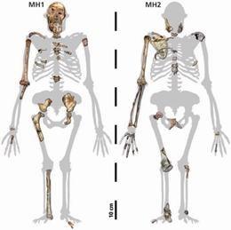 Oto, co pozostało z dwojga naszych przodków  /L. R. Berger et al./AAAS