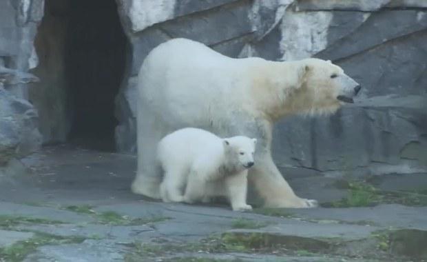 Oto Hertha. Berlińskie zoo nadało imię niedźwiadkowi polarnemu