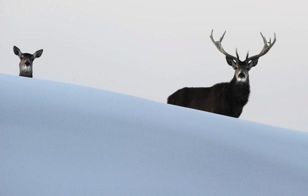 Oto najlepsze zdjęcie tego tygodnia! /Felix Kaestle /PAP/EPA