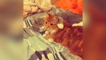 Oto naprawdę nierozłączne koty