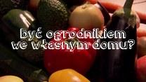 Oto pięć najłatwiejszych do wyhodowania warzyw