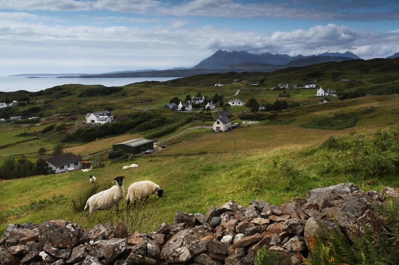 Owce i rozrzucone zabudowania wiejskie to typowy krajobraz Isle of Skye /123RF/PICSEL