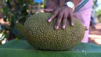 Owoc zamiast mięsa? Dżakfrut to nowe superfood