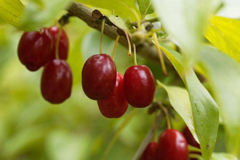 Owoce derenia /©123RF/PICSEL