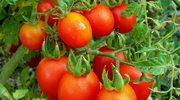 Owoce i warzywa z balkonu. Jak to zrobić