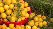 Owoce jesieni. Kiedy i jak je jeść?