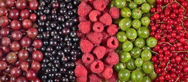 Owoce miękkie to nasze wielkie bogactwo /©123RF/PICSEL
