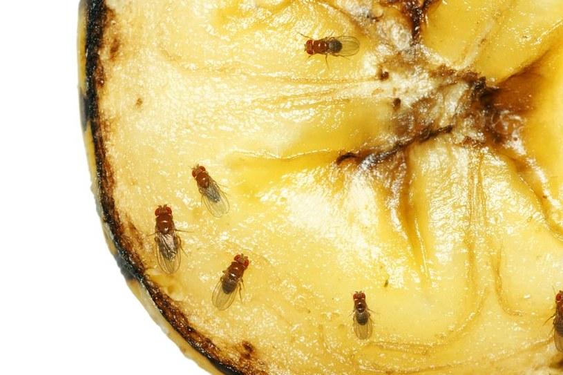 Owoce przyciągają muszki /©123RF/PICSEL