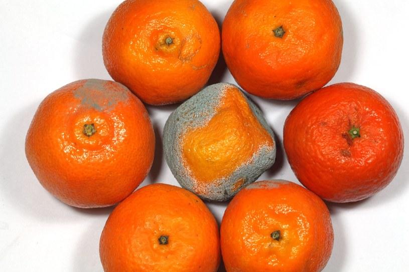 Owoce z pierwszymi oznakami pleśni powinny być natychmiast wyrzucane /123RF/PICSEL