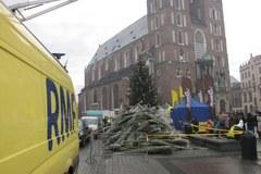 Pachnące drzewka od RMF FM na krakowskim Rynku Głównym
