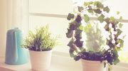 Pachnące rośliny do twojego domu