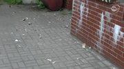 Paczka wybuchła w rękach pracownika poczty
