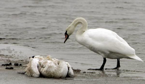 Padłe ptaki znaleziono na plażach w Niemczech i Polsce /AFP