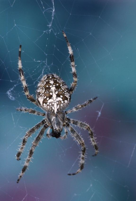 pająk /© Photogenica