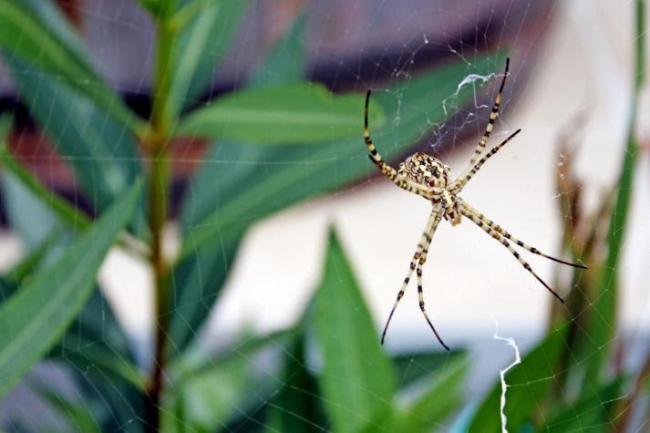 pająki odstraszanie /© Photogenica