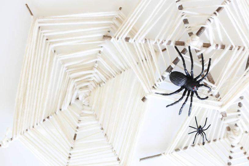 pajęcza sieć /© Photogenica