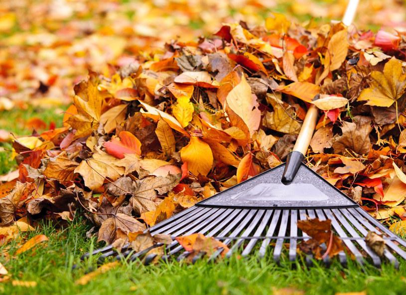 Palenie liści jest zabronione /123RF/PICSEL
