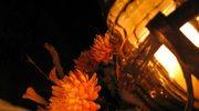Pamięci bezimiennych zmarłych gdańszczan