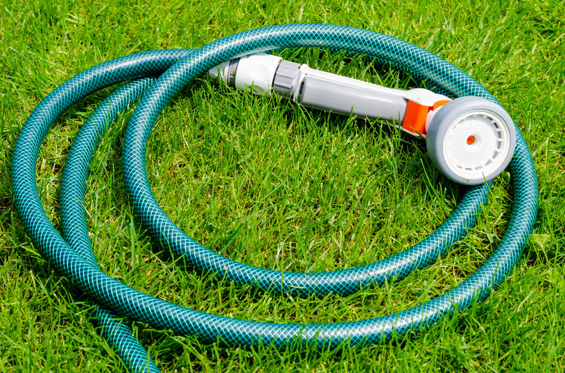 Pamiętaj o regularnym podlewaniu - to skutecznie ochroni rośliny przed mrozem /123RF/PICSEL