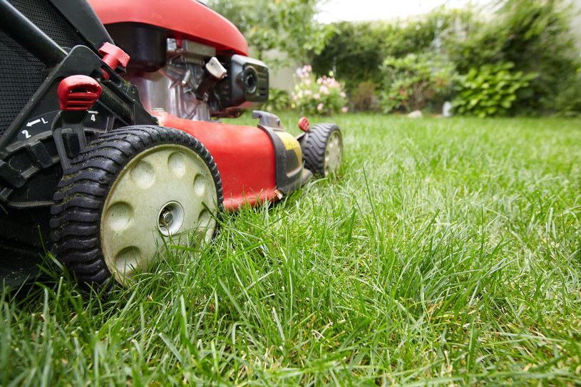 Pamiętaj o skoszeniu trawnika! /123RF/PICSEL