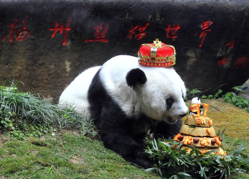 Panda Basi /Imaginechina /East News
