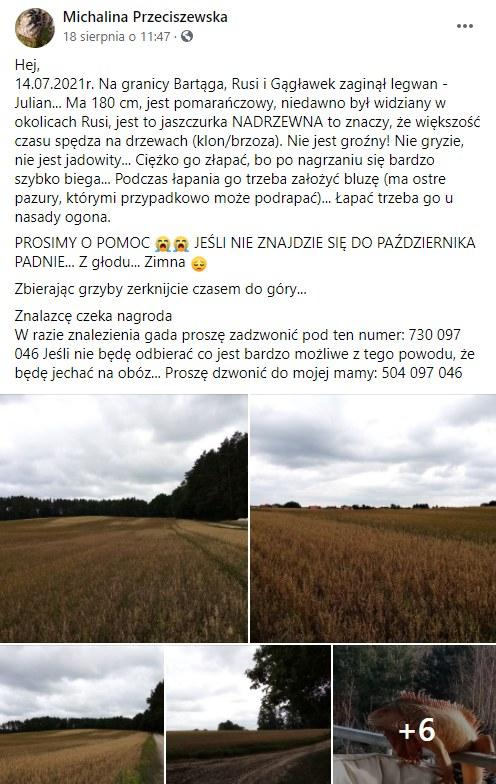 Pani Michalina poszukuje Juliana (Źródło: Zaginione/Znalezione Zwierzęta - OLSZTYN i okolice) /facebook.com