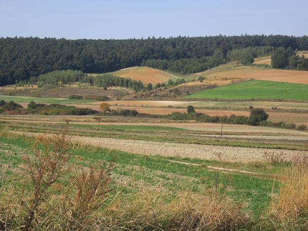 Państwowa ziemia podrożała prawie 14 procent /INTERIA.PL