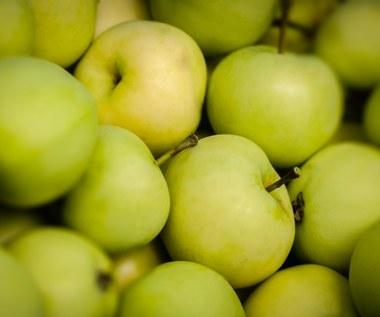 Papierówka: Ulubiona odmiana jabłek Polaków