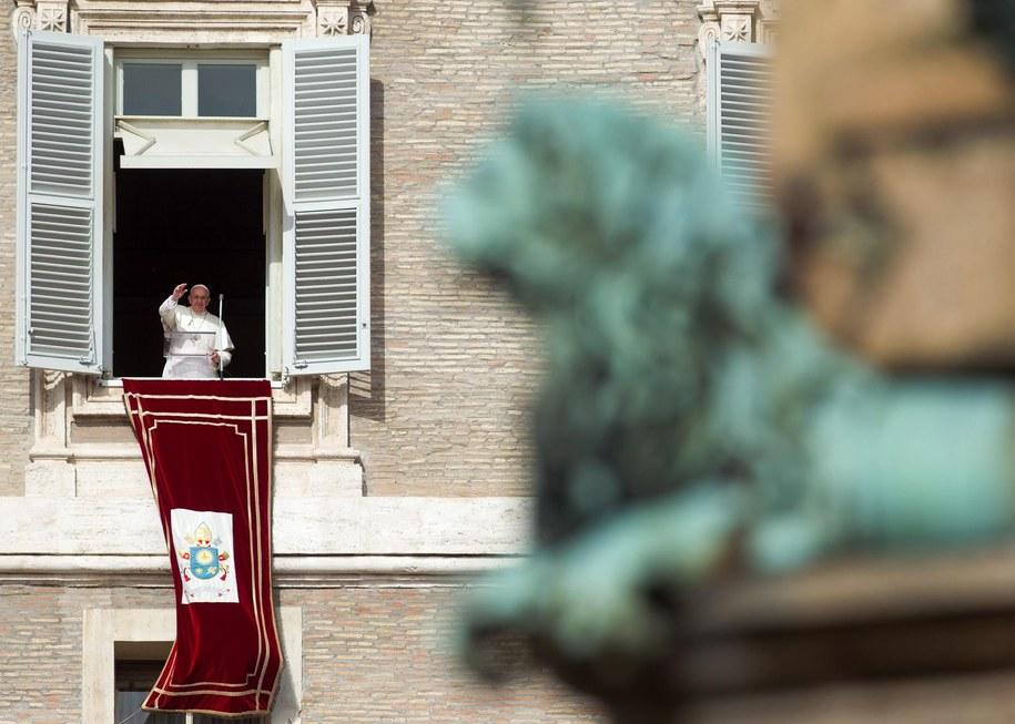 """""""Papieskie gołębie"""" w rejonie Watykanu często padają ofiarą drapieżnych i agresywnych mew /CLAUDIO PERI /PAP/EPA"""