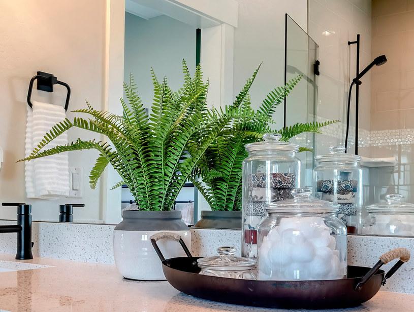 Paproć to idealna roślina do łazienki
