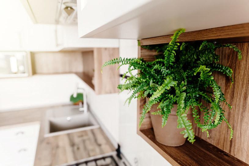 Paproć w kuchni /©123RF/PICSEL