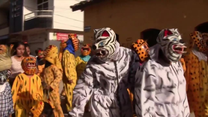 Parada tygrysów w kajdanach na cześć Maryi Dziewicy. Meksykanie świętowali Wniebowstąpienie