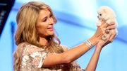 Paris Hilton rozstała się z miliarderem!