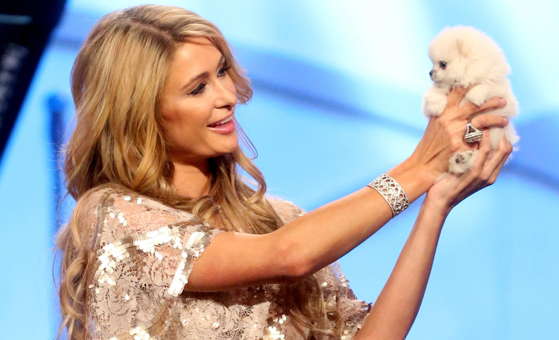 Paris Hilton znów została singielką /Frederick M,. Brown /Getty Images
