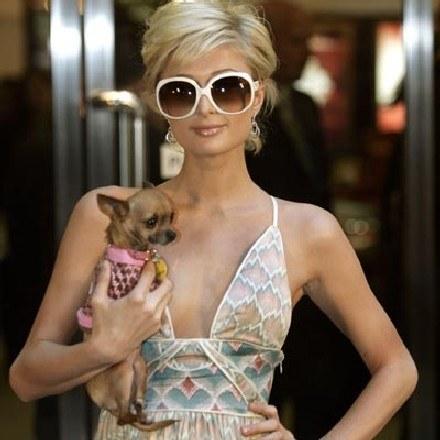 Paris Hilton /arch. AFP