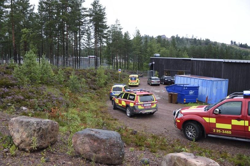 Park dla dzikich zwierząt Orsa w Szwecji /ULF PALM /PAP/EPA